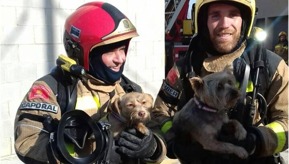 Dos Bombers amb els gossos rescatats al Morell.