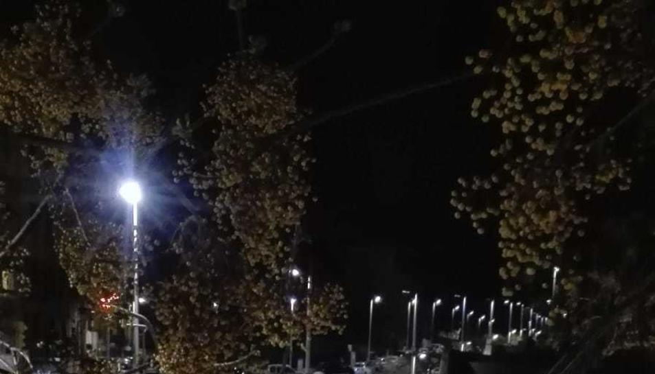 Els Bombers van retirar l'arbre de la via pública.