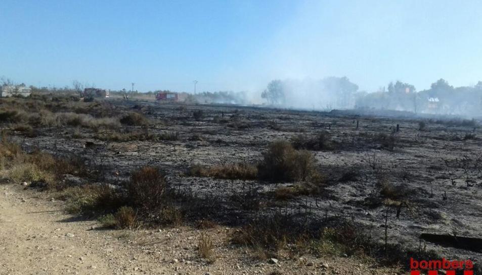 Imatge de la vegetació cremada a Riumar.