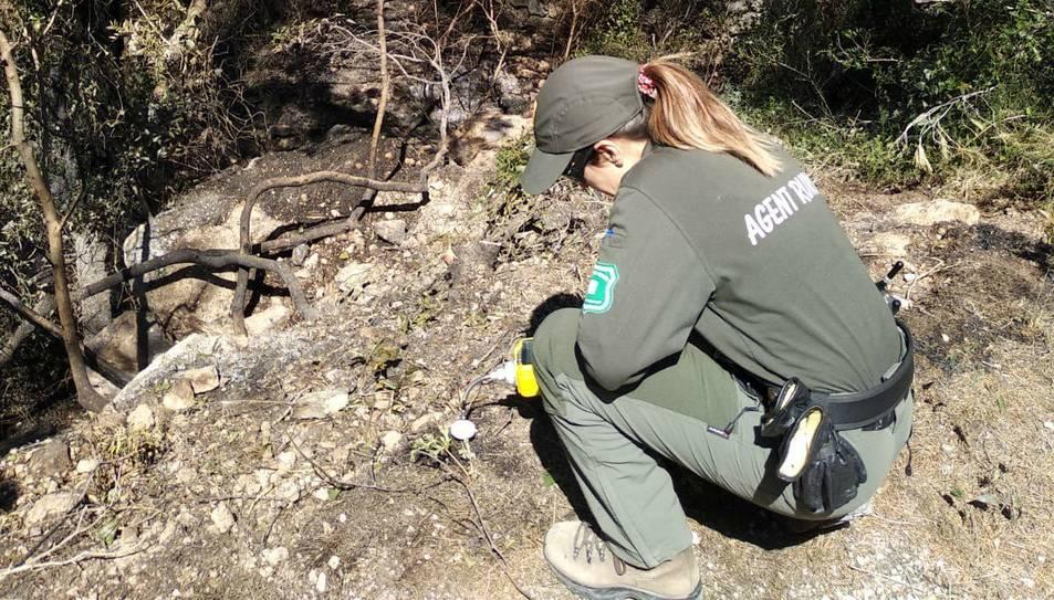 Una agent rural en un dels tres focus de l'incendi.