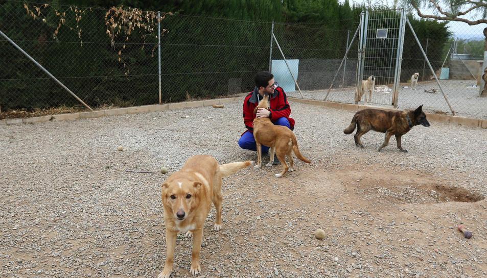 El centre no descarta tornar a tenir gossos si reben més ajudes econòmiques.