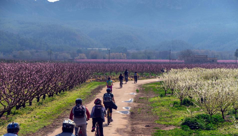Pla general de turistes fent una ruta en bicicleta entre arbre fruiters florits a la Ribera d'Ebre.