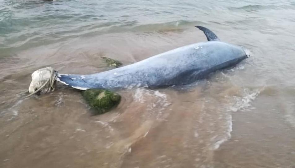 Imatge del dofí encallat a la sorra.