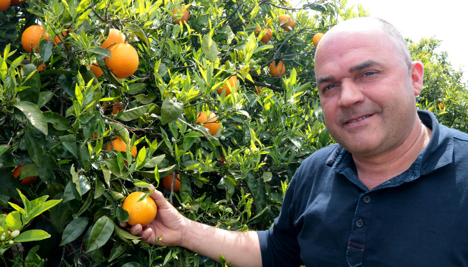 El fins ara responsable nacional dels cítrics de la Unió de Pagesos, Carlos Roig.