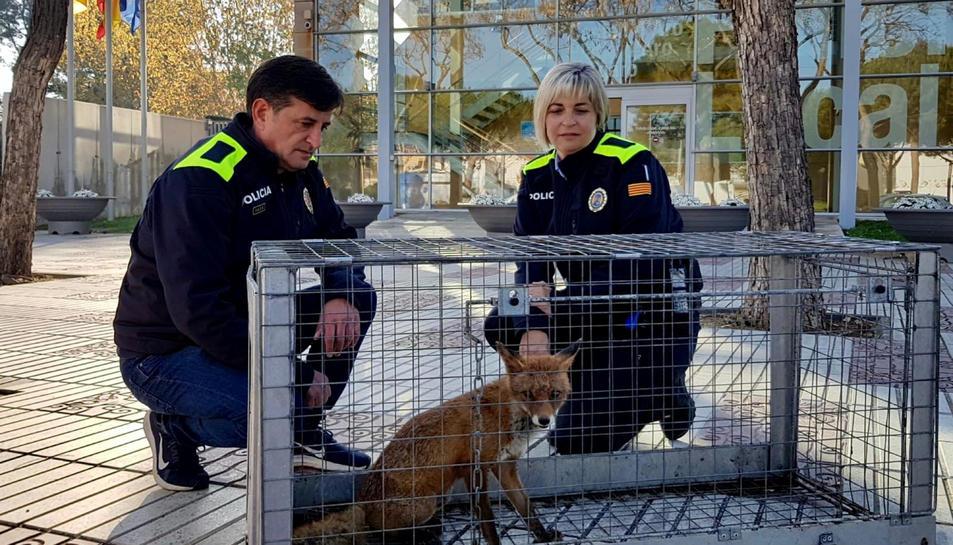 La unitat de Medi Natural de la Policia Local de Platja d'Aro amb la guilla després de capturar-la.