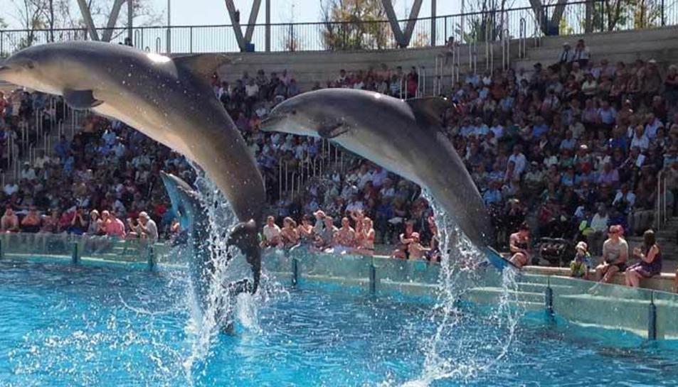 Els dofins estaven en una piscina d'ones amb una profunditat d'1,80 metres i que no tenia ombres.