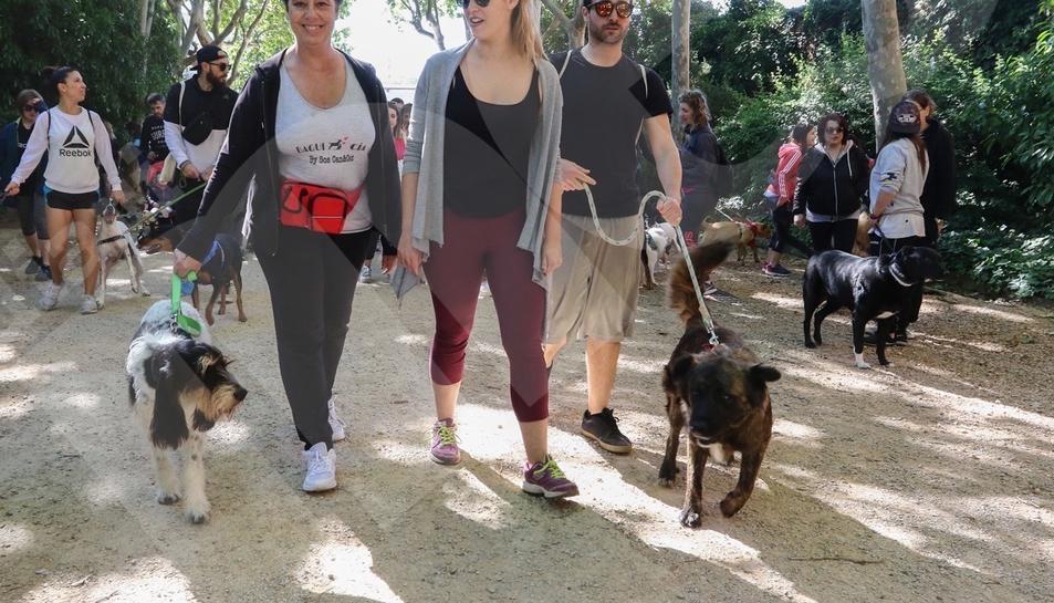 Passejada solidària de gossos