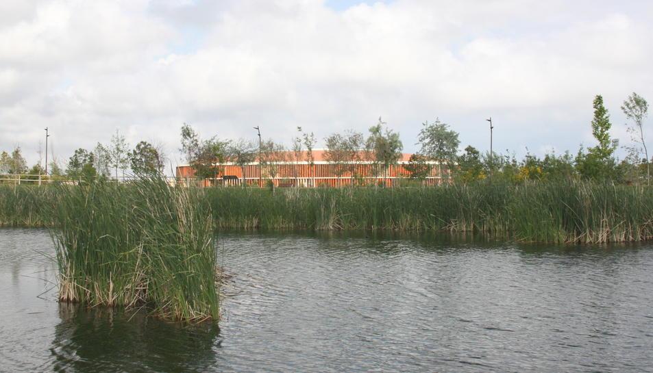 Pla mitjà de la vegetació que comença a créixer a l'interior del llac artificial, amb el Palau d'Esports de fons.