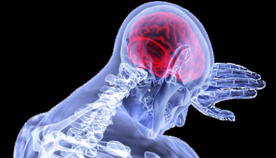 Els científics han estudiant què passa amb el cervell quan deixa de bategar el cor.