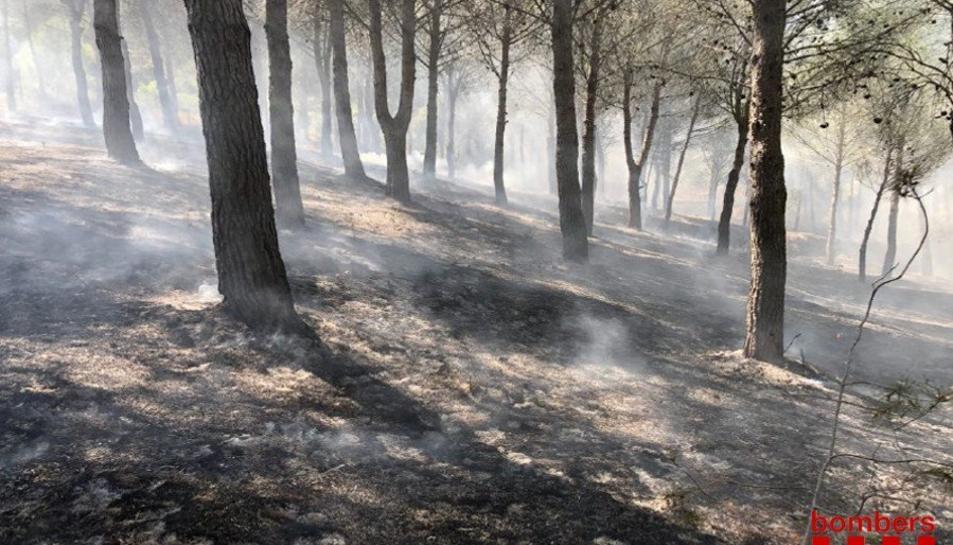 A Almoster van cremar 5.000 metres quadrats de vegetació.