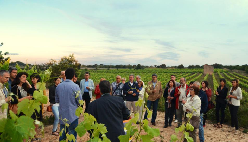L'activitat enoturística comença contemplant la posta de sol des de les vinyes.
