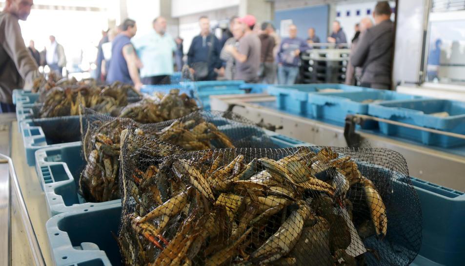 Pla detall de caixes de cranc blau preparades per a la subhasta de peix a Sant Carles de la Ràpita. Imatge del 22 de maig de 2019
