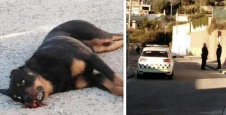Imatge de l'animal mort que va compartir un usuari de Facebook.