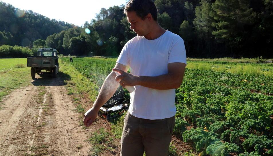 Josep Pedret ruixant-se amb repel·lent davant d'un dels seus horts al terme municipal de Benifallet on pateixen la plaga de la mosca negra.