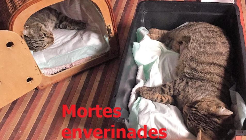 Vimbodí Pets ha denunciat l'atac a diversos gats al municipi.