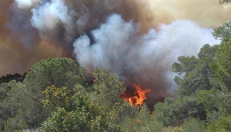 Flames d'un incendi a la zona de la Collada del Perelló