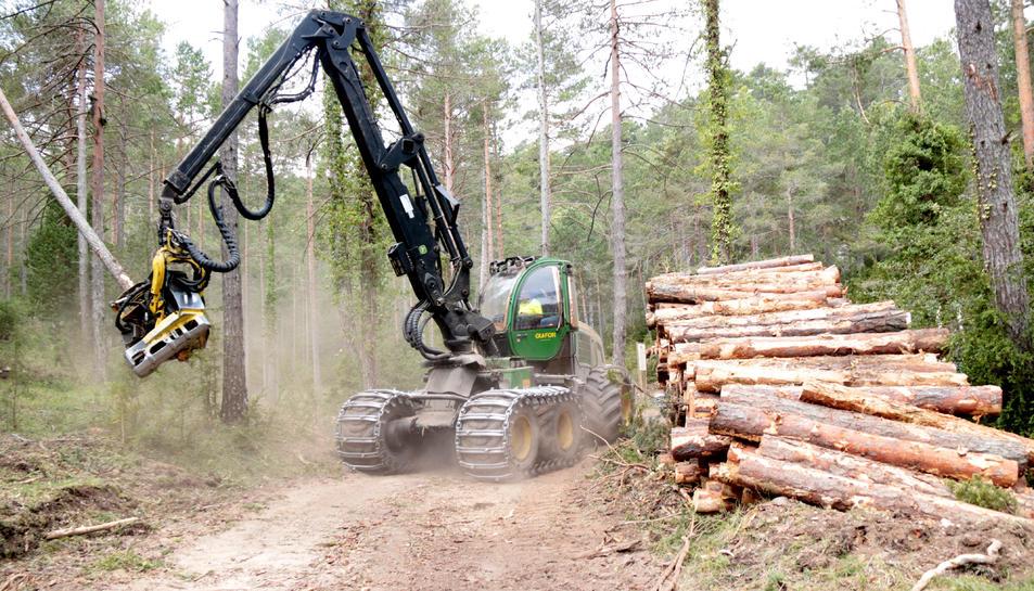 La màquina taladora avançant per una pista del bosc de Refalgarí, al parc natural dels Ports.