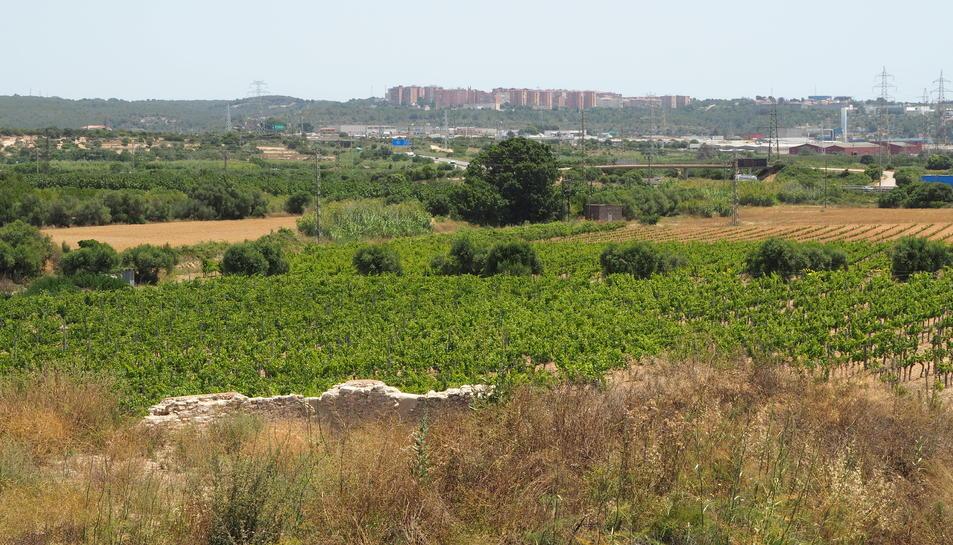Imatge de la finca ubicada al Celler de Mas dels Frares on hi ha el jaciment.
