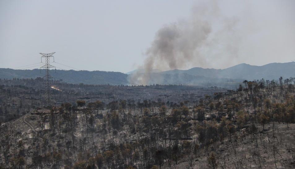 Pla general d'una de les zones cremades entre els termes municipals de Vinebre i la Palma d'Ebre en l'incendi de la Ribera d'Ebre. Imatge del 27 de juny del 2019 (Horitzontal).