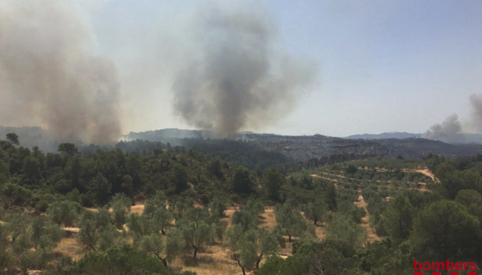Reproduccions al flanc dret de l'incendi Forestal de Ribera d'Ebre.