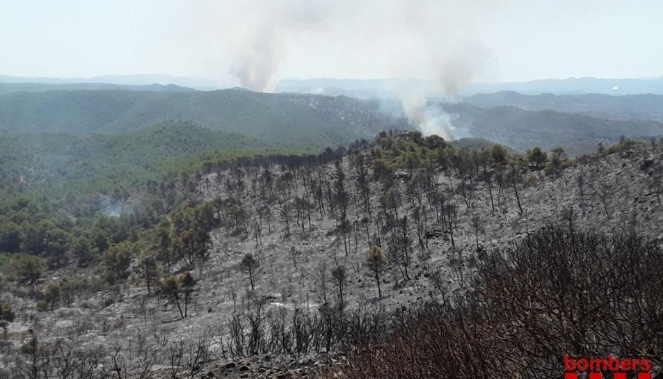 Imatge de la zona cremada de la Ribera d'Ebre.