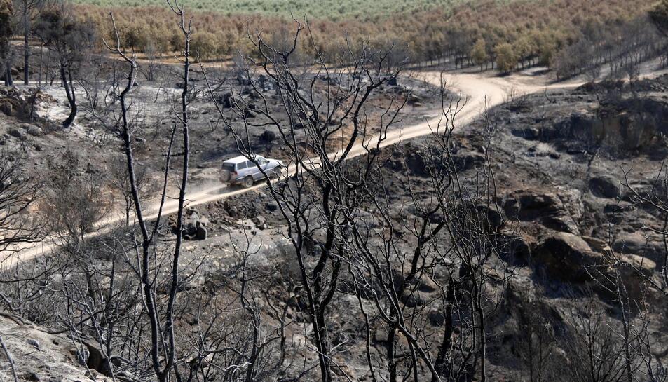 Un vehicle circula pels camins de Bovera, entre finques cremades. Imatge de l'1 de juliol de 2019.