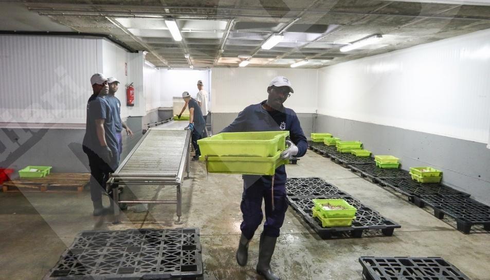 Finalitza la veda de pescadors de Tarragona