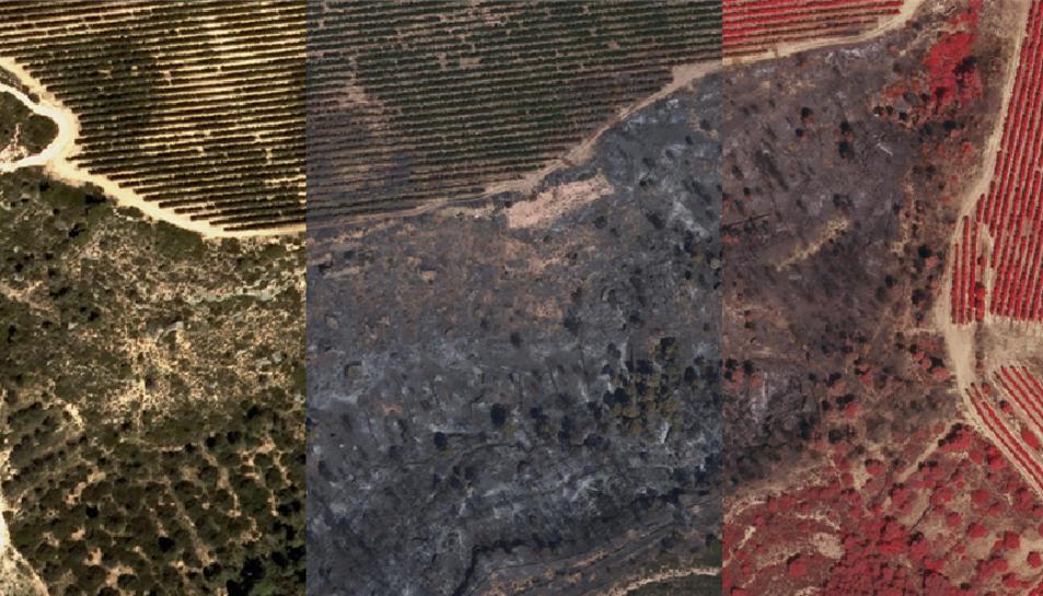 Imatge aèria de la zona afectada per l'incendi.