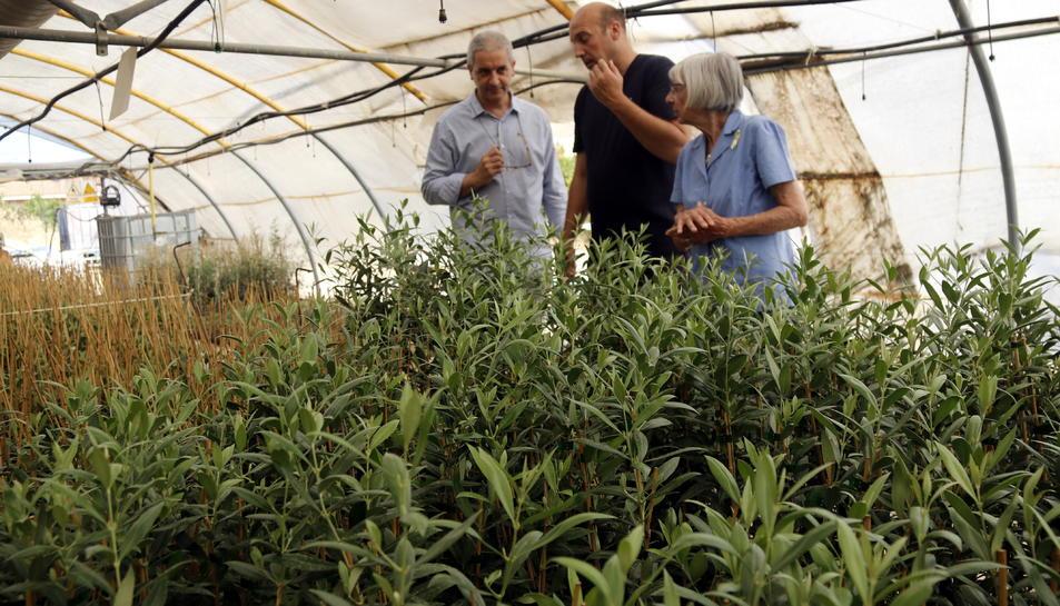 Els responsables d'ACUDAM, Angelina Roure i Jordi Morillas, amb un treballador de l'entitat, observant el planter d'oliveres de Castellnou de Seana.