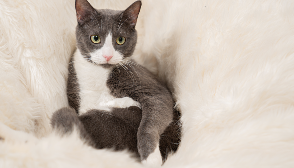 Imatge de Dante, The cat, fotografiat per les xarxes socials.