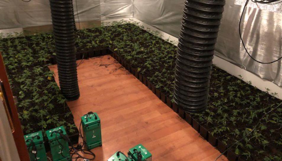 Els Bombers van descobrir un cultiu de marihuana de prop de 940 plantes.