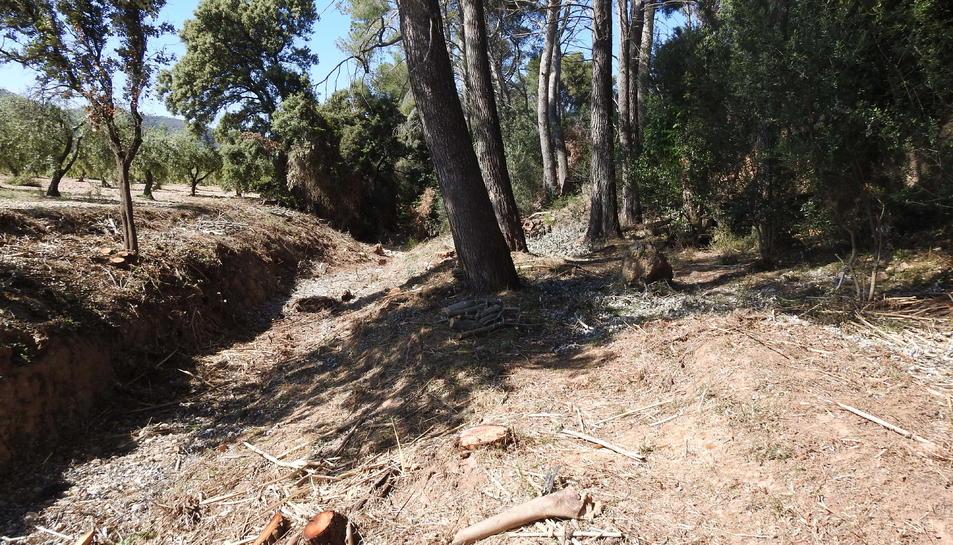 El bosc de la llera del torrent de Sant Marc, amb espècies talades.