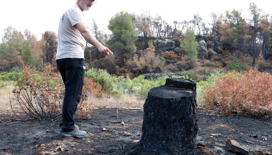 El director tècnic del Grup de Natura Freixe, Pere Josep Jiménez, mostrant una soca socarrimada per l'incendi de la Ribera d'Ebre, que l'entitat just havia tallat per desbrossar una finca a Flix.