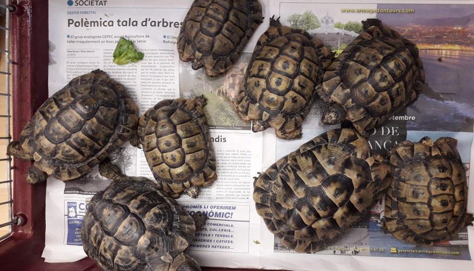 Imatge de les tortugues recollides.