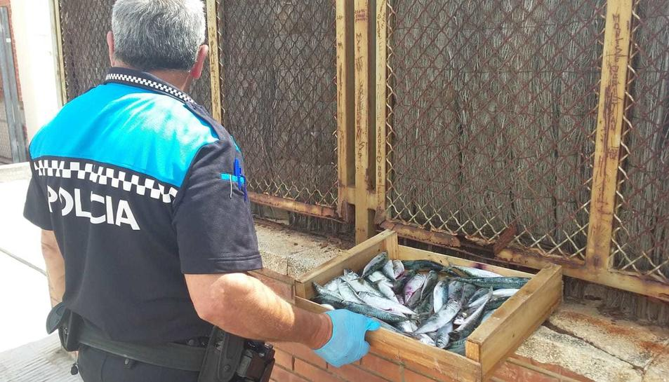 Un agent amb el peix decomissat.