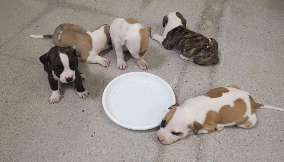 Imatge dels quatre gossos que busquen família.