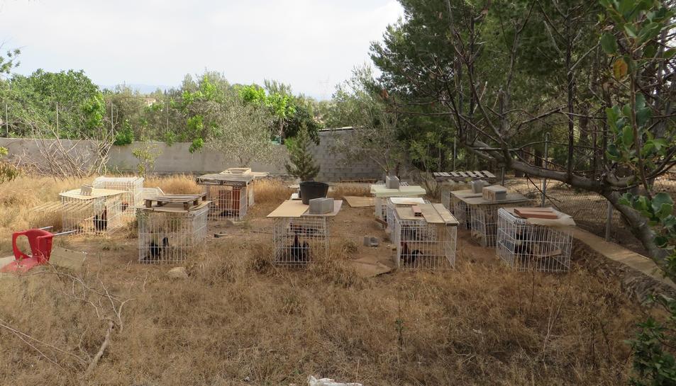 Imatge de les gàbies individuals on estaven tancats els galls.