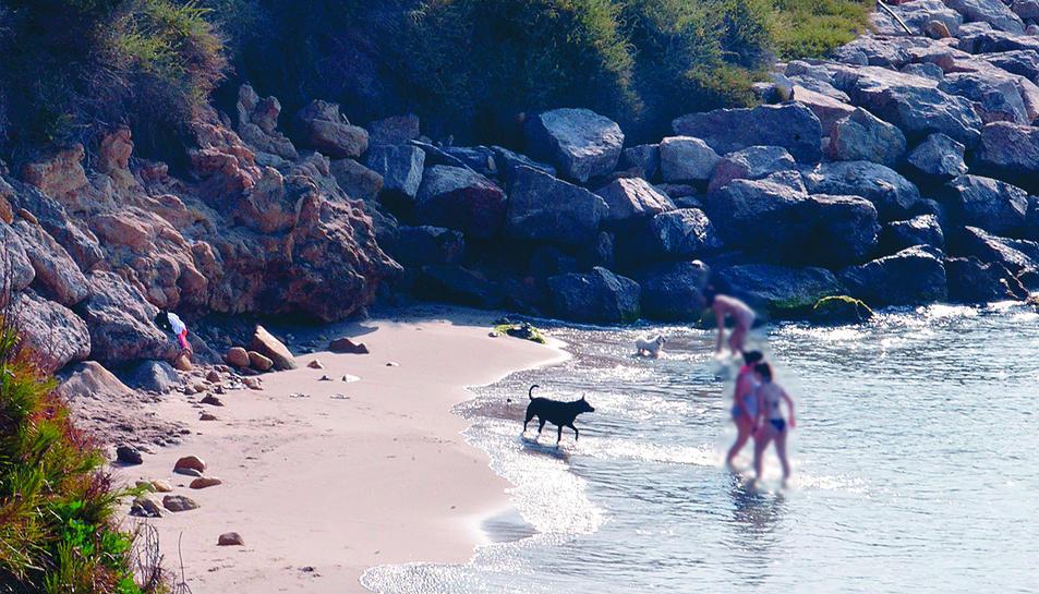 Diversos gossos i els seus propietaris al nou espai de platja on se'ls permet l'accés i el bany a l'estiu.
