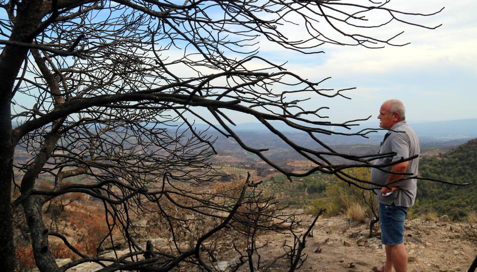 Primer pla d'un arbre cremat amb un dels pagesos de Flix afectats observant la panoràmica de la superfície que va cremar l'incendi.