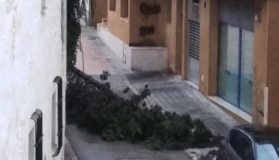 Imatge d'un arbre caigut a Cunit.