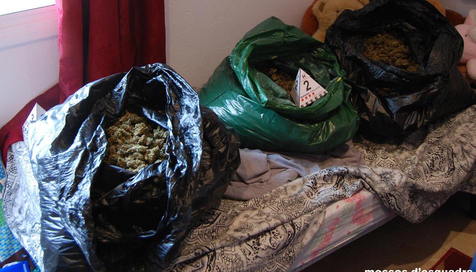 Els detinguts també traficaven amb marihuana.