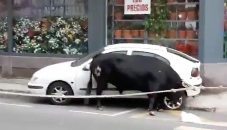 Imatge del bou amb el vehicle, que ha quedat destrossat.