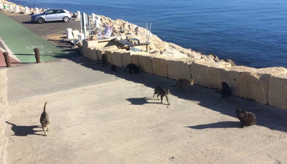 Un grup de gats passeja al Far de la Banya, al final del passeig de l'Escullera.