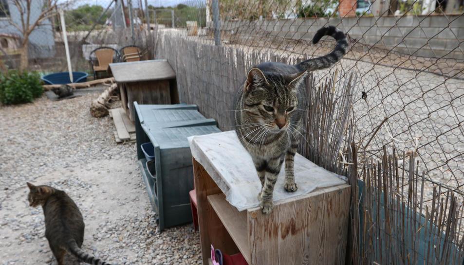 A la nova finca només hi podran portar els gats, de moment.