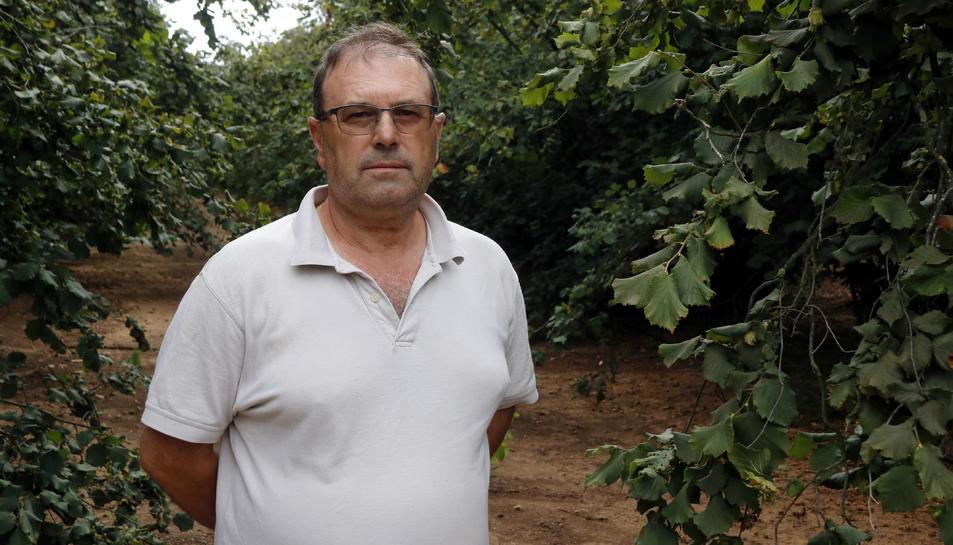 Pla mitjà del responsable nacional del sector de la fruita seca d'Unió de Pagesos, Rafel Español, en un camp d'avellaners. Imatge del 20 d'agost del 2019