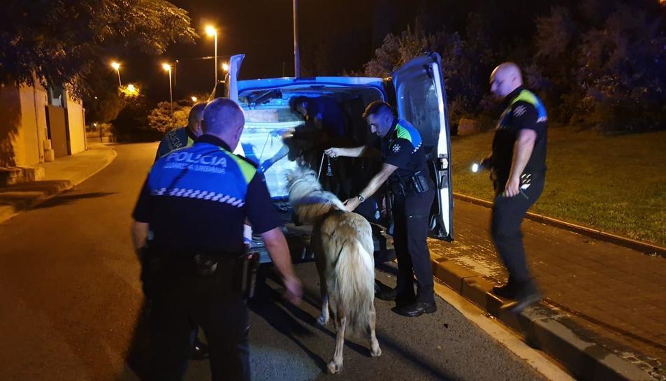 Imatge dels dos ponis un cop retirats per la Guàrdia Urbana.