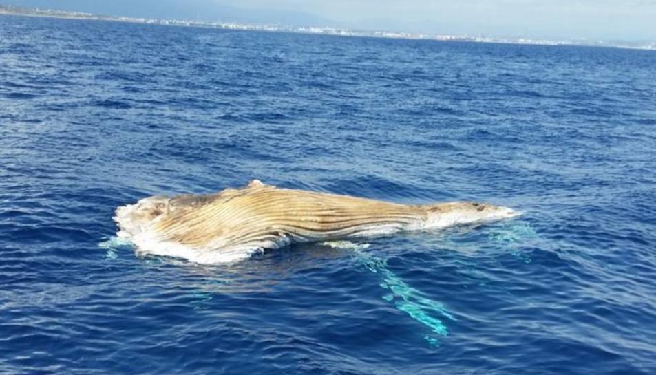 Imatge d'arxiu d'un cetaci localitzat