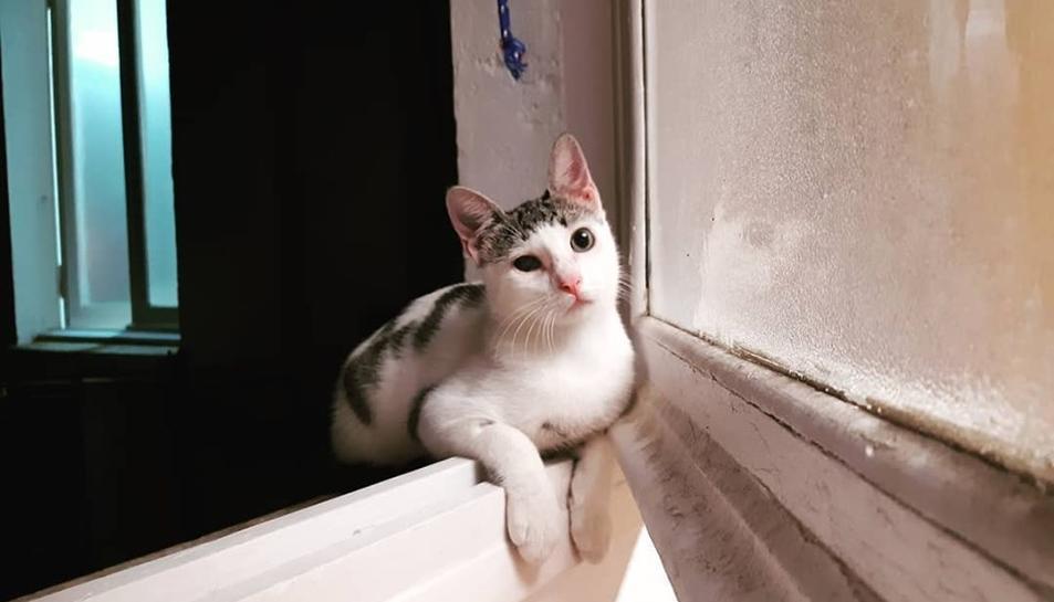 Imatge del gat compartida per Pinedo a les xarxes socials.