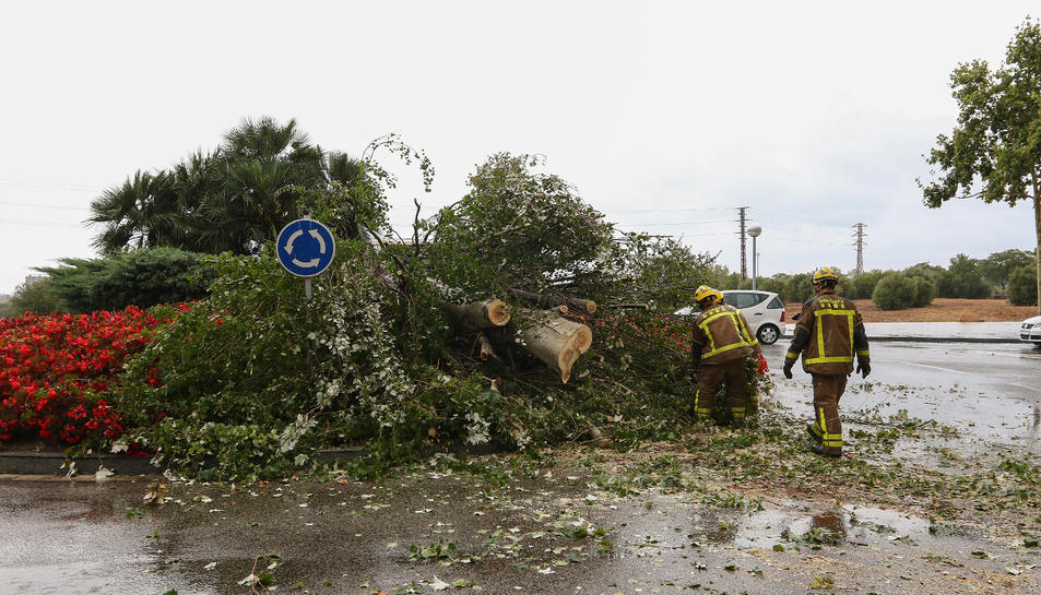 Imatge de l'arbre que ha caigut a Vila-seca.