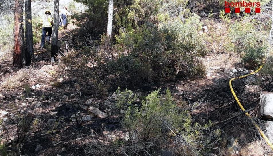 Ha cremat 150 metres quadrats d'una pineda.